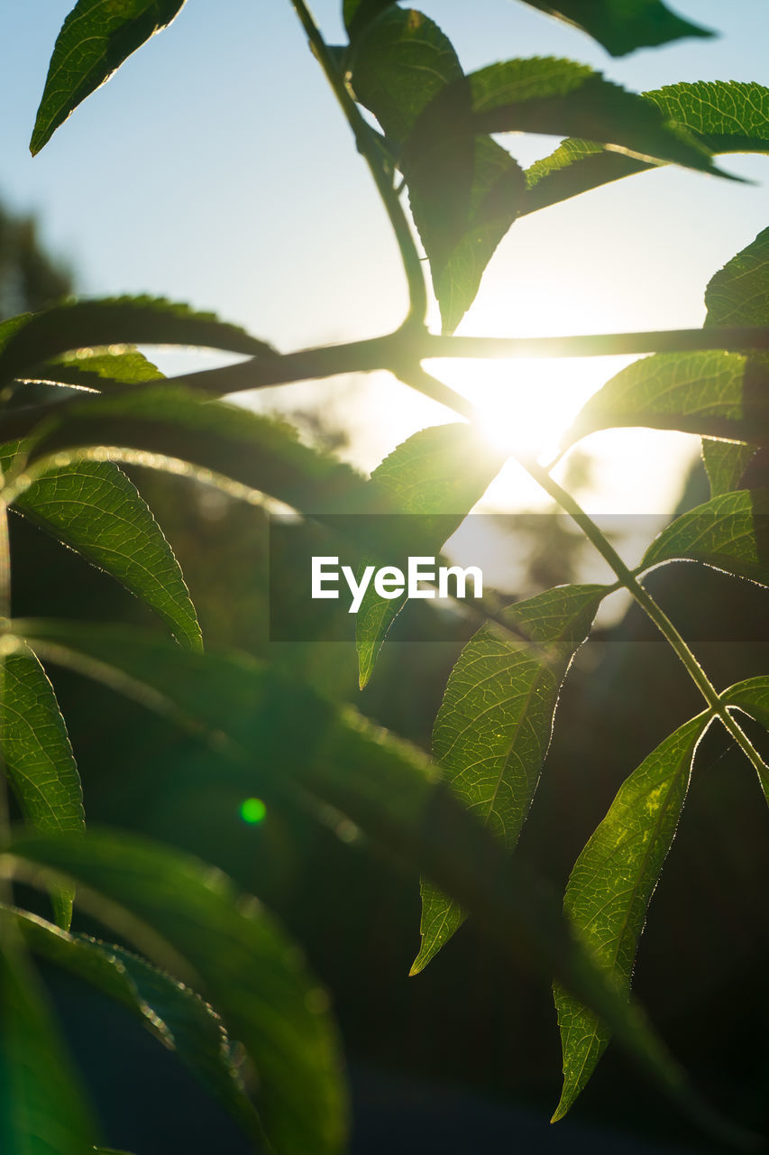 leaf, plant part, green color, plant, growth, nature, sunlight, beauty in nature, close-up, no people, day, sky, outdoors, sunbeam, lens flare, sun, focus on foreground, sunny, freshness, selective focus, leaves