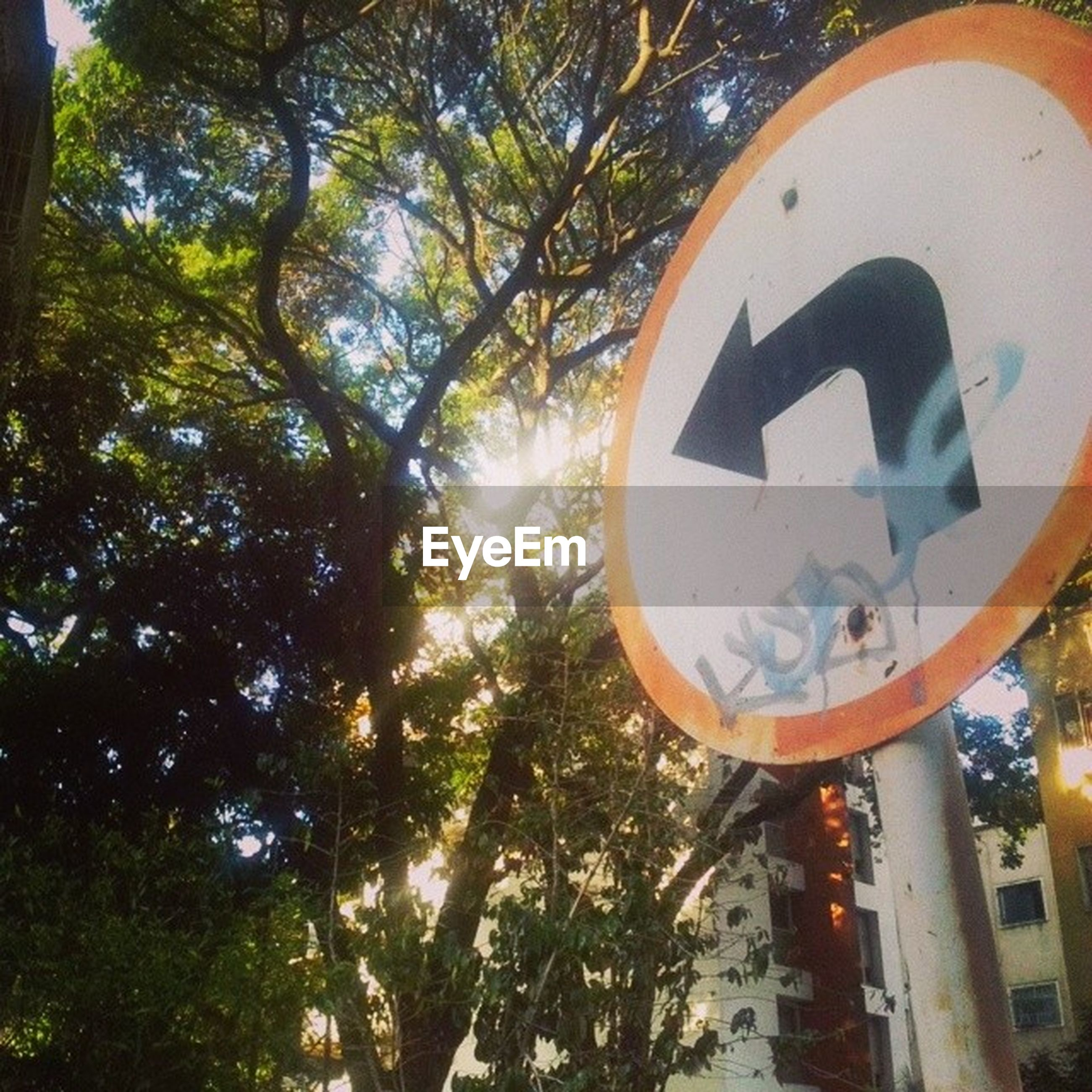 tree, low angle view, communication, text, circle, sky, road sign, sign, built structure, growth, outdoors, western script, day, no people, information sign, lighting equipment, architecture, branch, street light, illuminated