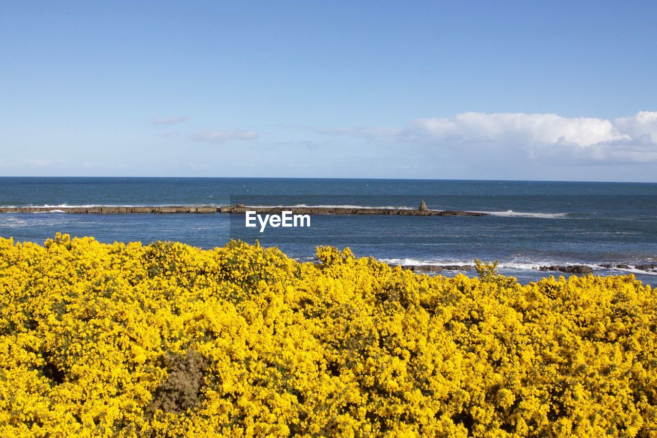 SCENIC VIEW OF SEA AND YELLOW FLOWERS ON BEACH