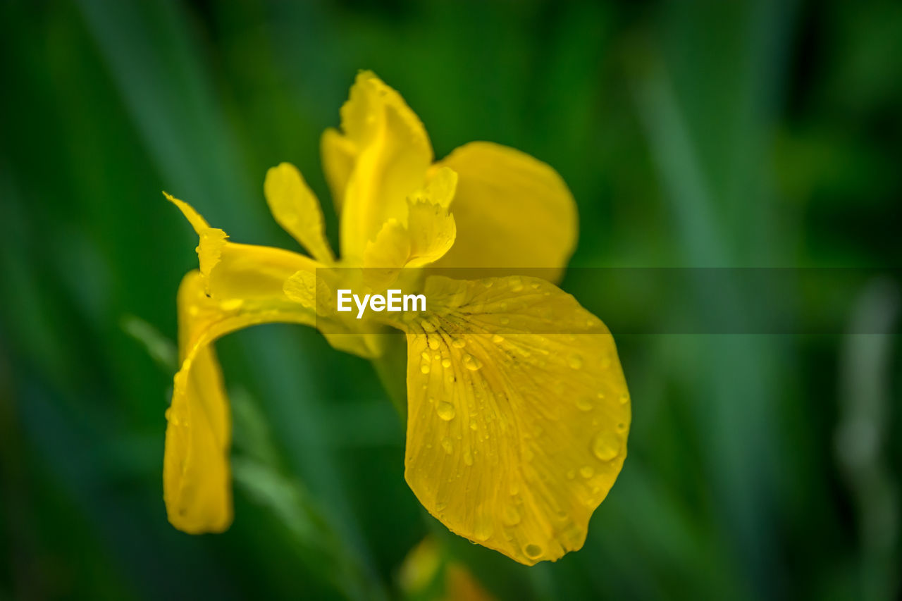 yellow, flower, flowering plant, beauty in nature, plant, vulnerability, fragility, petal, freshness, growth, inflorescence, flower head, close-up, nature, focus on foreground, no people, day, selective focus, pollen