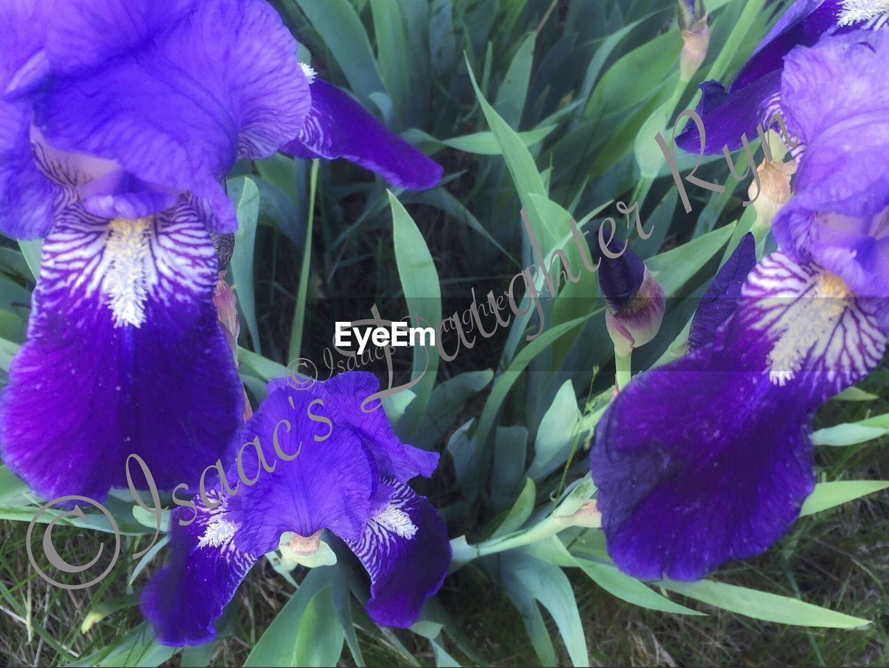 flower, purple, growth, petal, nature, fragility, beauty in nature, flower head, plant, freshness, blooming, outdoors, no people, day, close-up, leaf, animal themes