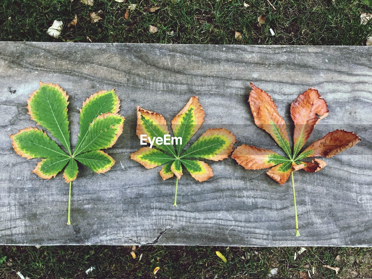 leaf, plant part, plant, no people, high angle view, nature, day, directly above, green color, leaves, close-up, outdoors, wood - material, growth, autumn, vulnerability, fragility, freshness, food, beauty in nature
