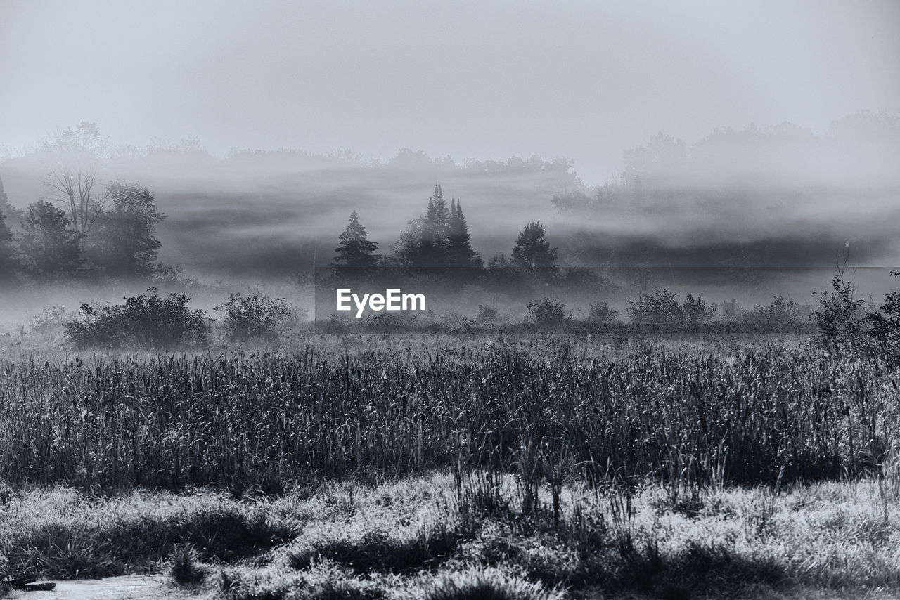 plant, beauty in nature, tranquil scene, tree, tranquility, fog, scenics - nature, environment, land, sky, landscape, growth, no people, non-urban scene, nature, field, day, remote, cold temperature, hazy