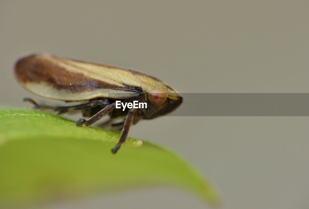 invertebrate, insect, one animal, animal themes, animal wildlife, animal, animals in the wild, plant part, leaf, close-up, selective focus, green color, nature, animal wing, no people, plant, fly, zoology, day, outdoors, animal eye
