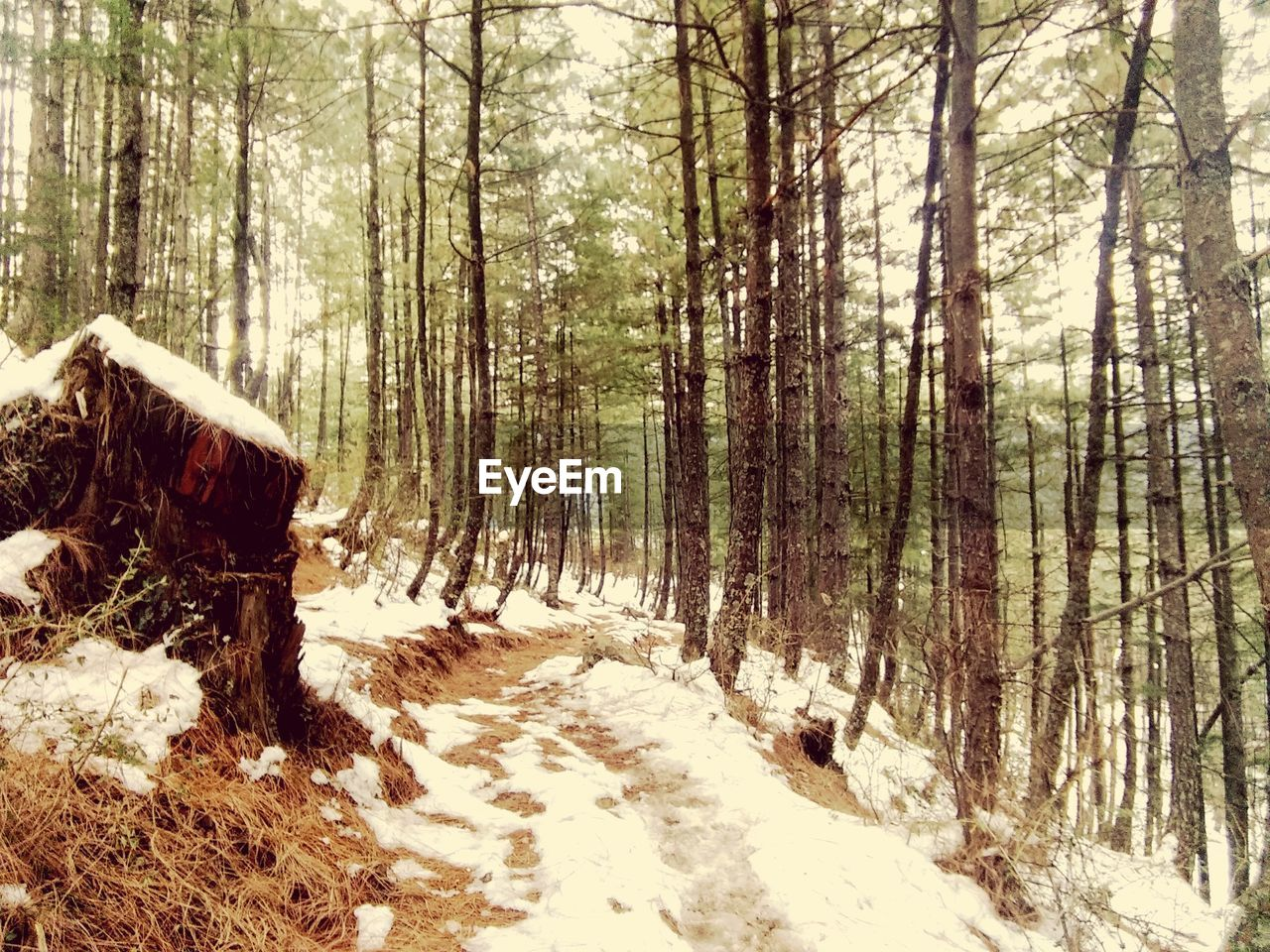 snow, winter, forest, tree, nature, cold temperature, tree trunk, day, no people, tranquility, beauty in nature, outdoors, scenics, landscape