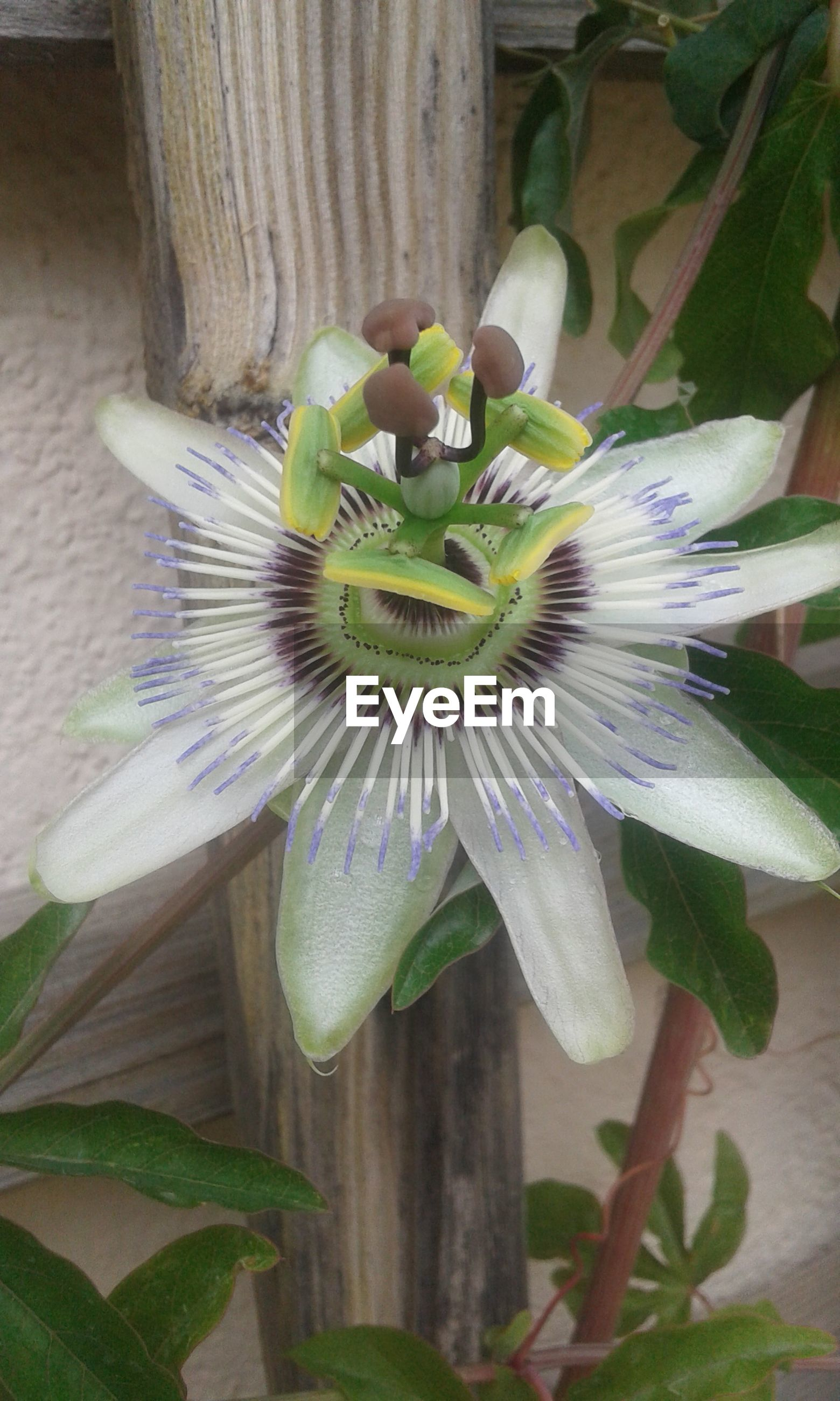 flower, freshness, growth, petal, flower head, leaf, fragility, beauty in nature, plant, green color, close-up, purple, nature, blooming, no people, day, in bloom, stem, pollen, outdoors, botany, focus on foreground, green, blue, blossom, stamen, growing