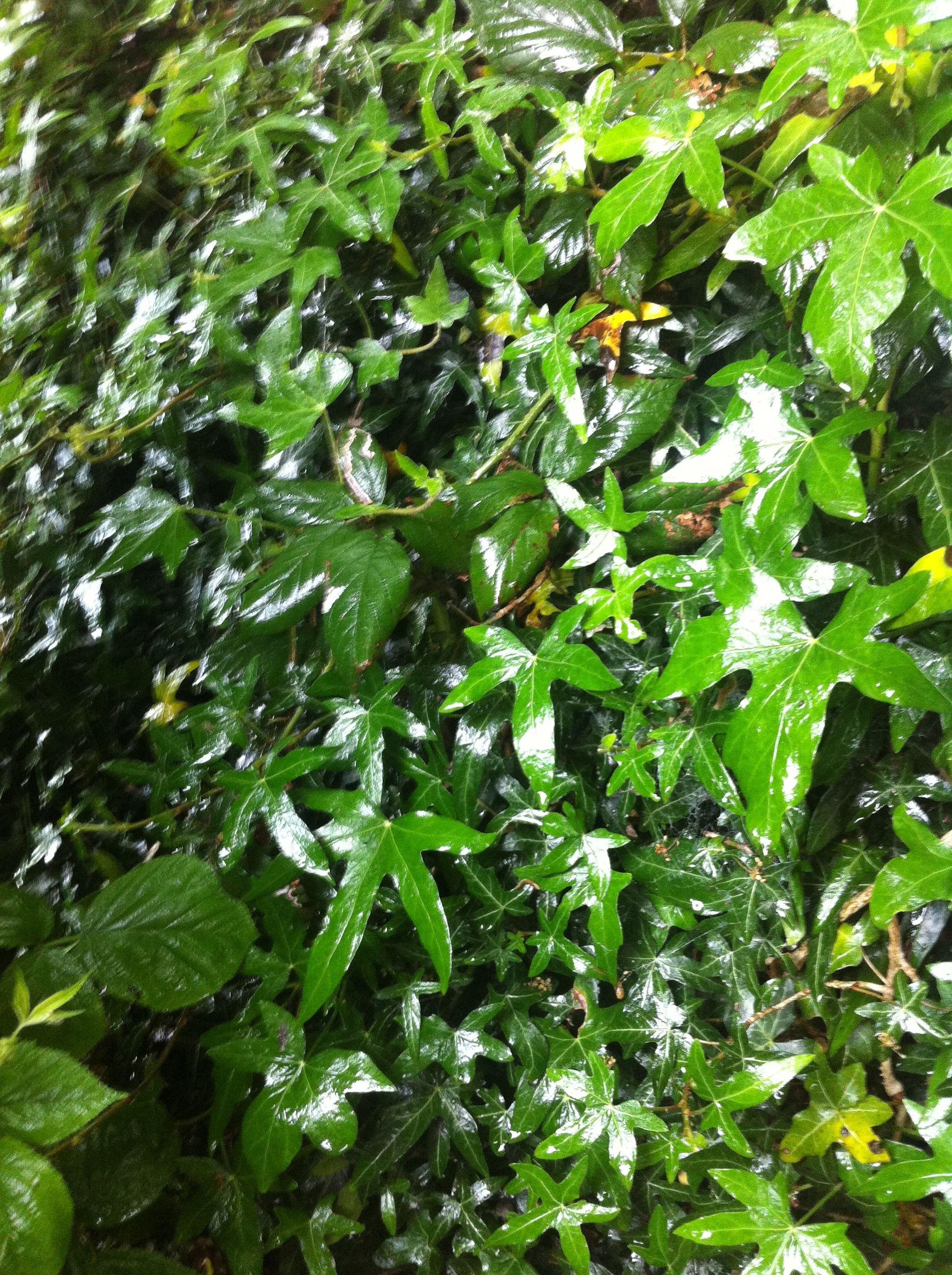 Full frame shot of wet plants during monsoon