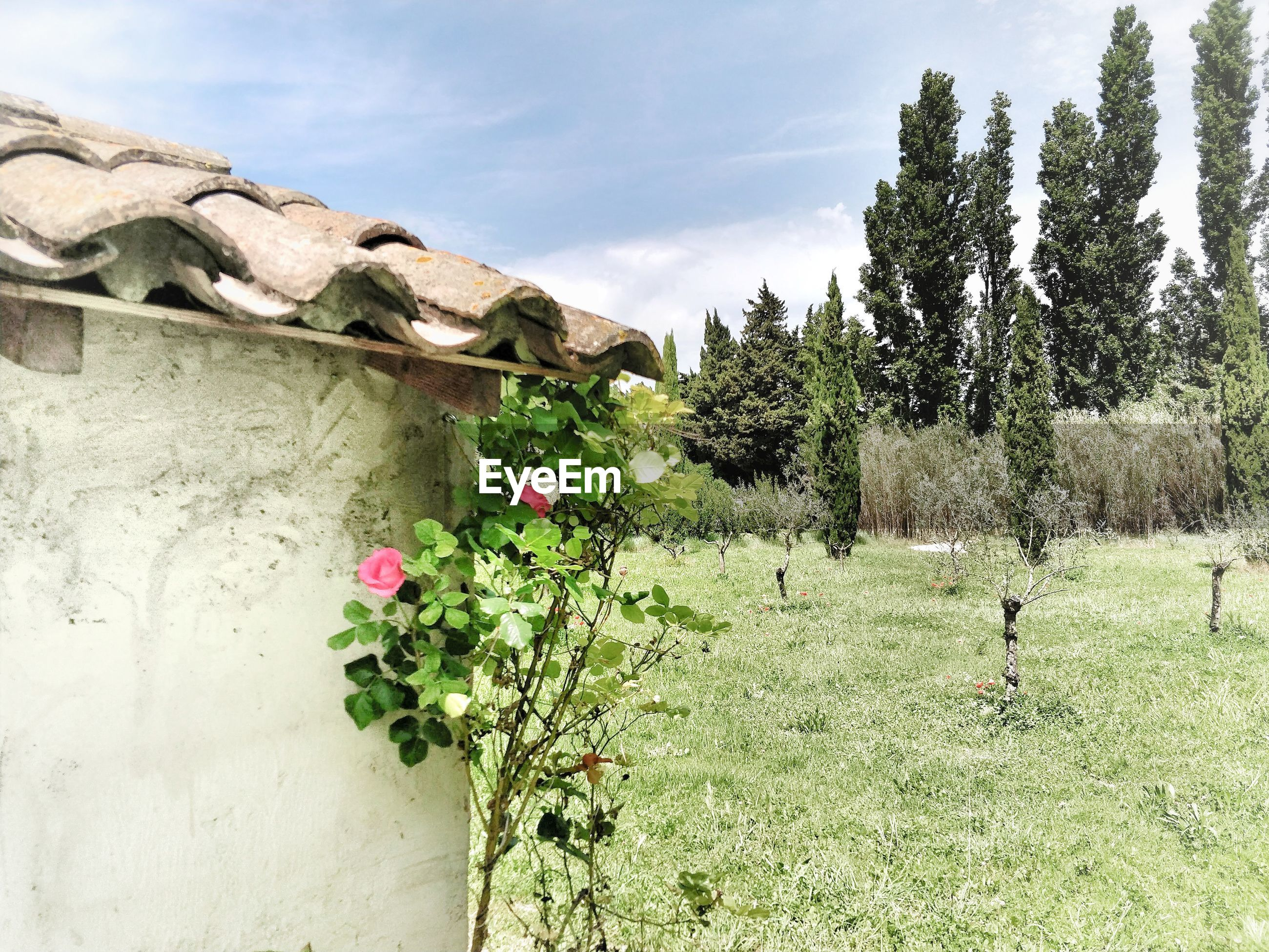 FLOWERING PLANTS ON FIELD AGAINST WALL