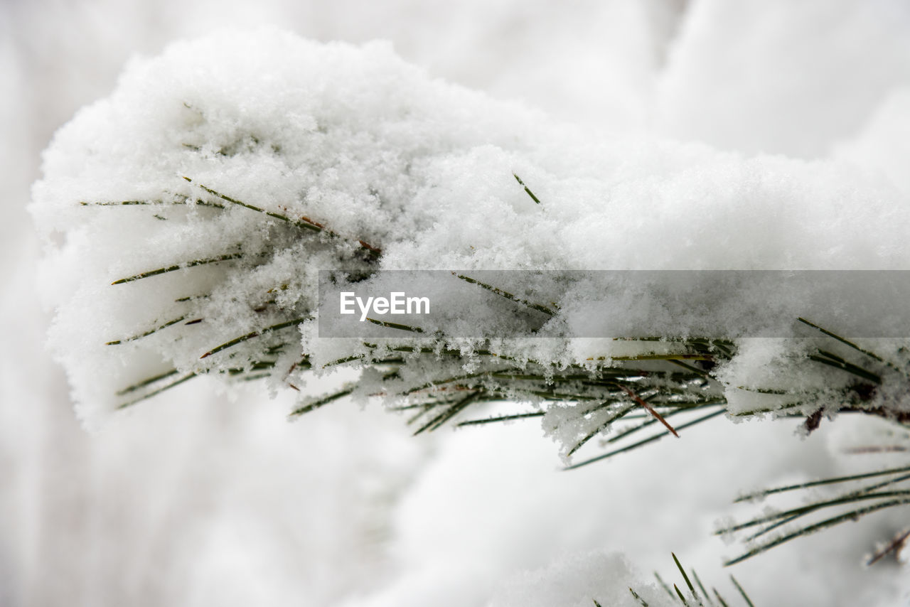 CLOSE-UP OF SNOW COVERED PLANT AGAINST CLOUDS