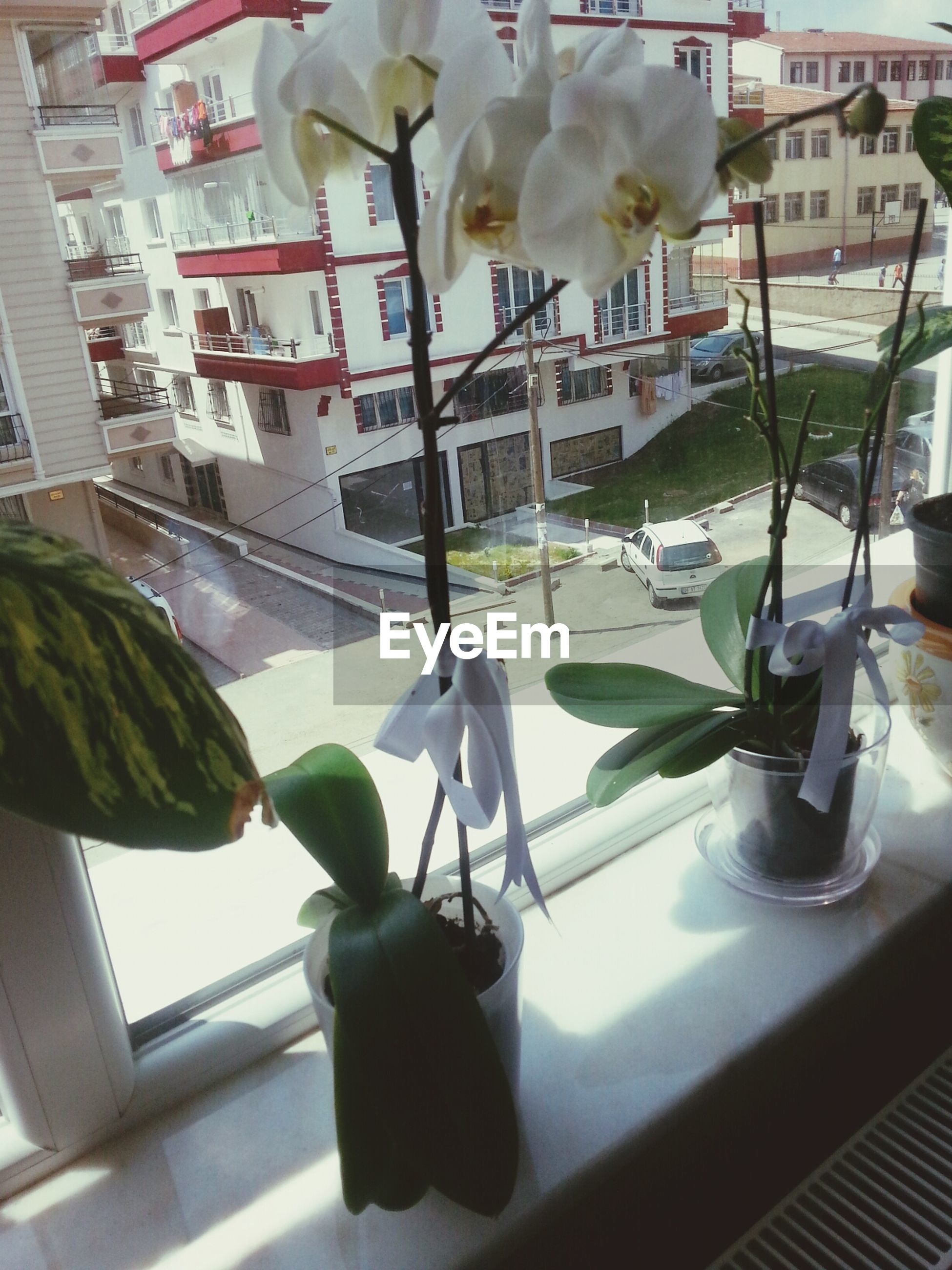 indoors, table, glass - material, window, vase, flower, transparent, home interior, potted plant, window sill, chair, freshness, plant, fragility, reflection, still life, growth, no people, decoration, day