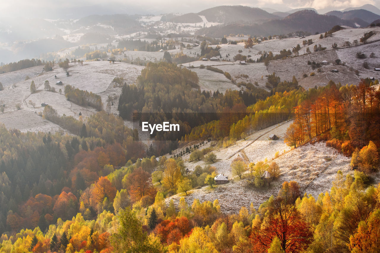 HIGH ANGLE VIEW OF TREES AND PLANTS DURING AUTUMN