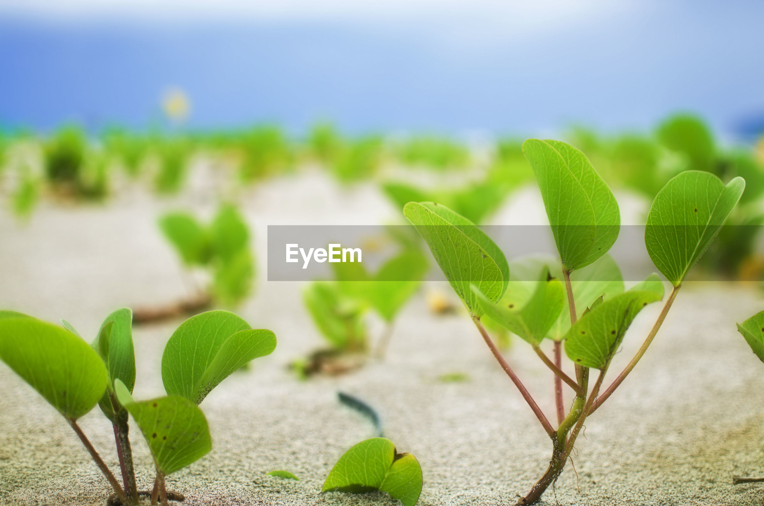 Close-up of plants growing on sandy field