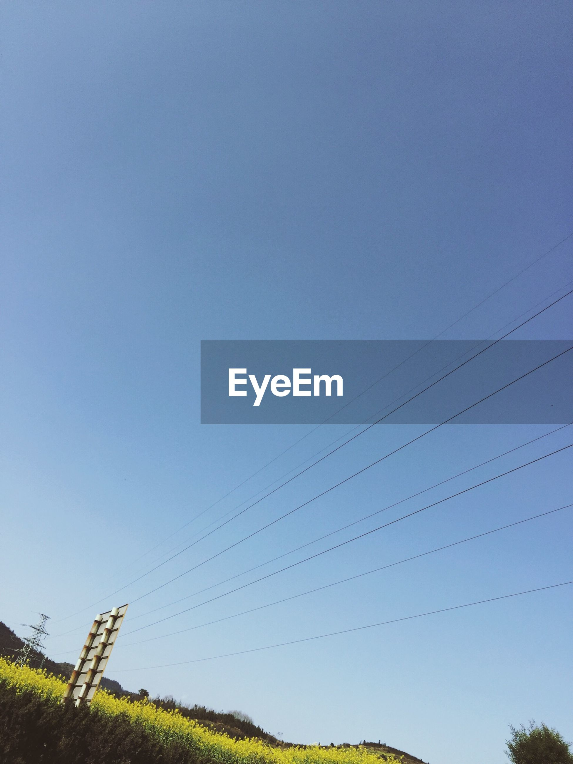 clear sky, power line, copy space, low angle view, blue, electricity pylon, tranquility, nature, cable, tranquil scene, beauty in nature, connection, power supply, tree, landscape, scenics, animal themes, electricity, field, growth