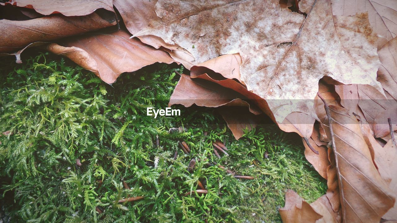 leaf, autumn, change, nature, dry, outdoors, day, fragility, growth, beauty in nature, close-up, grass, no people
