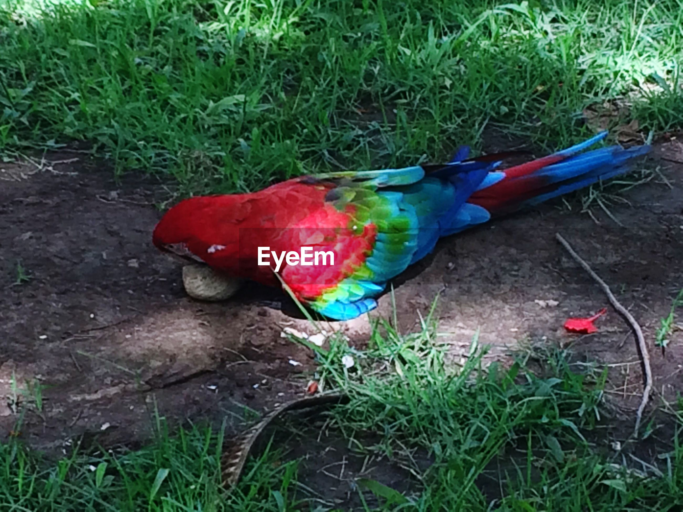 HIGH ANGLE VIEW OF BIRD ON GRASS