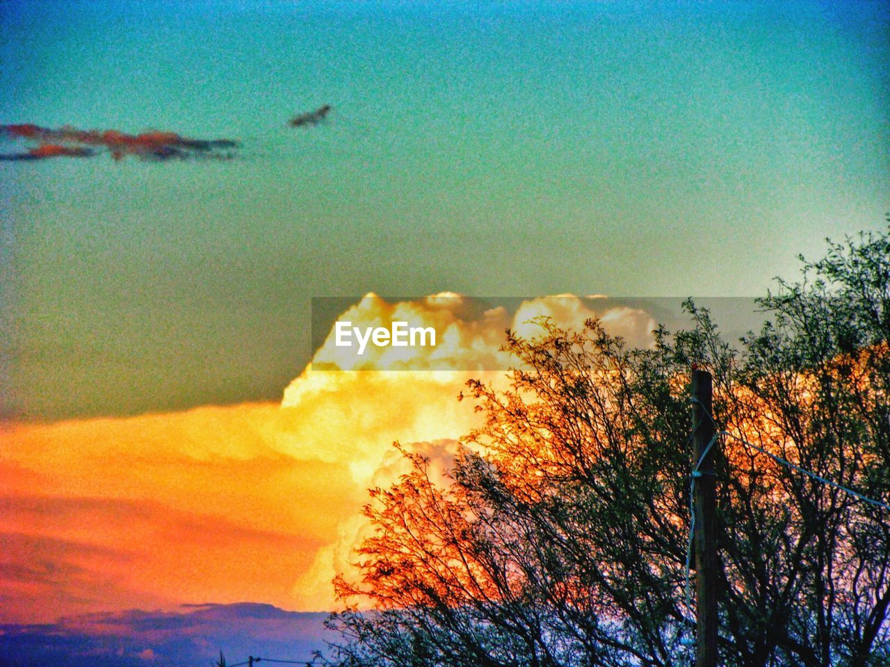 nature, sky, no people, tranquility, tree, beauty in nature, scenics, outdoors, sunset, day