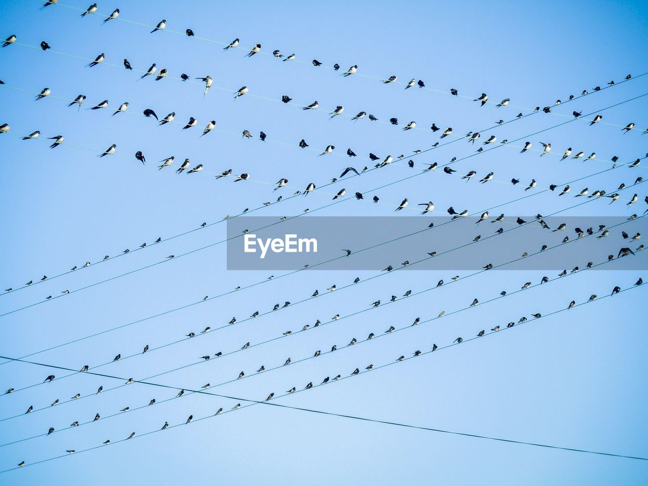 Flock Of Birds Perching On Cables Against Sky