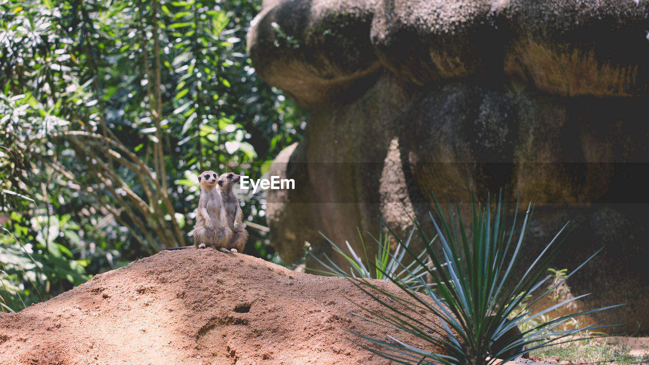 animal themes, animal, plant, animals in the wild, mammal, animal wildlife, no people, vertebrate, one animal, tree, nature, solid, day, focus on foreground, rock, rodent, rock - object, growth, close-up, outdoors, animal head