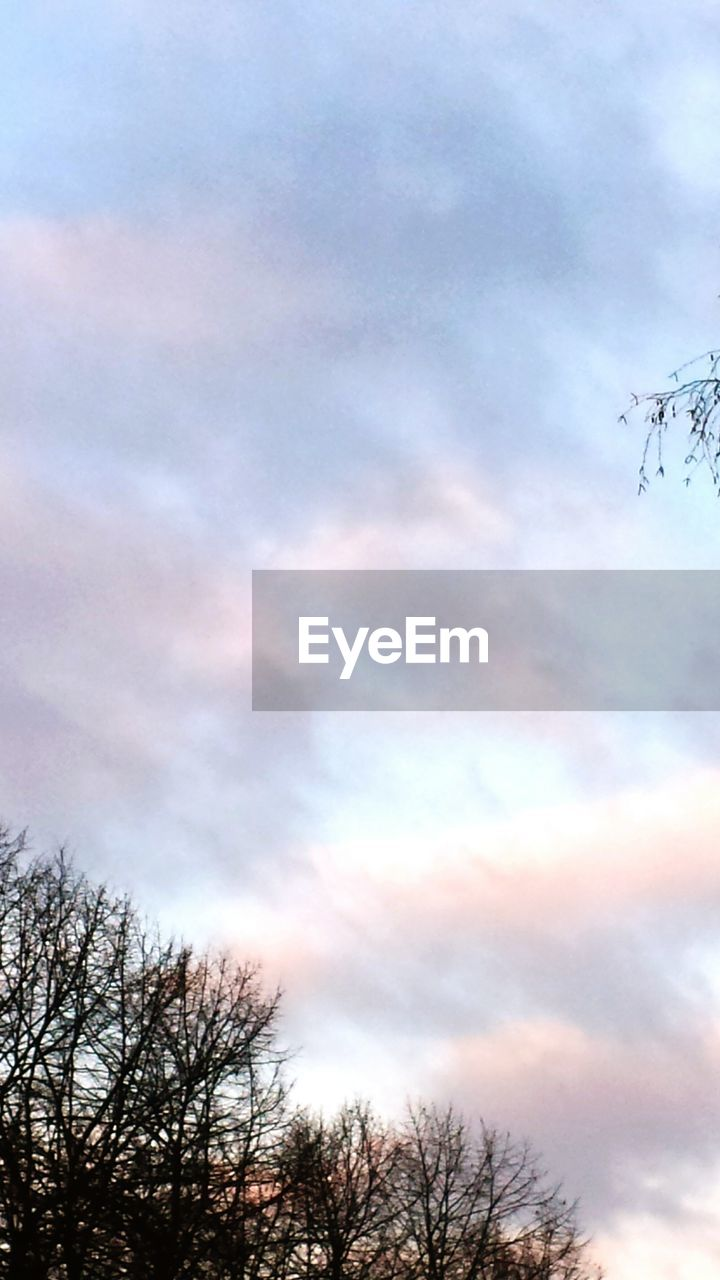 sky, cloud - sky, low angle view, tree, nature, beauty in nature, outdoors, silhouette, tranquility, no people, scenics, tranquil scene, day, bare tree
