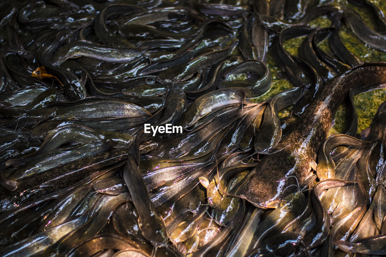 backgrounds, full frame, no people, close-up, food, food and drink, high angle view, seafood, animal, abundance, freshness, healthy eating, day, animal wildlife, nature, wellbeing, indoors, still life, animal themes, mussel, marine