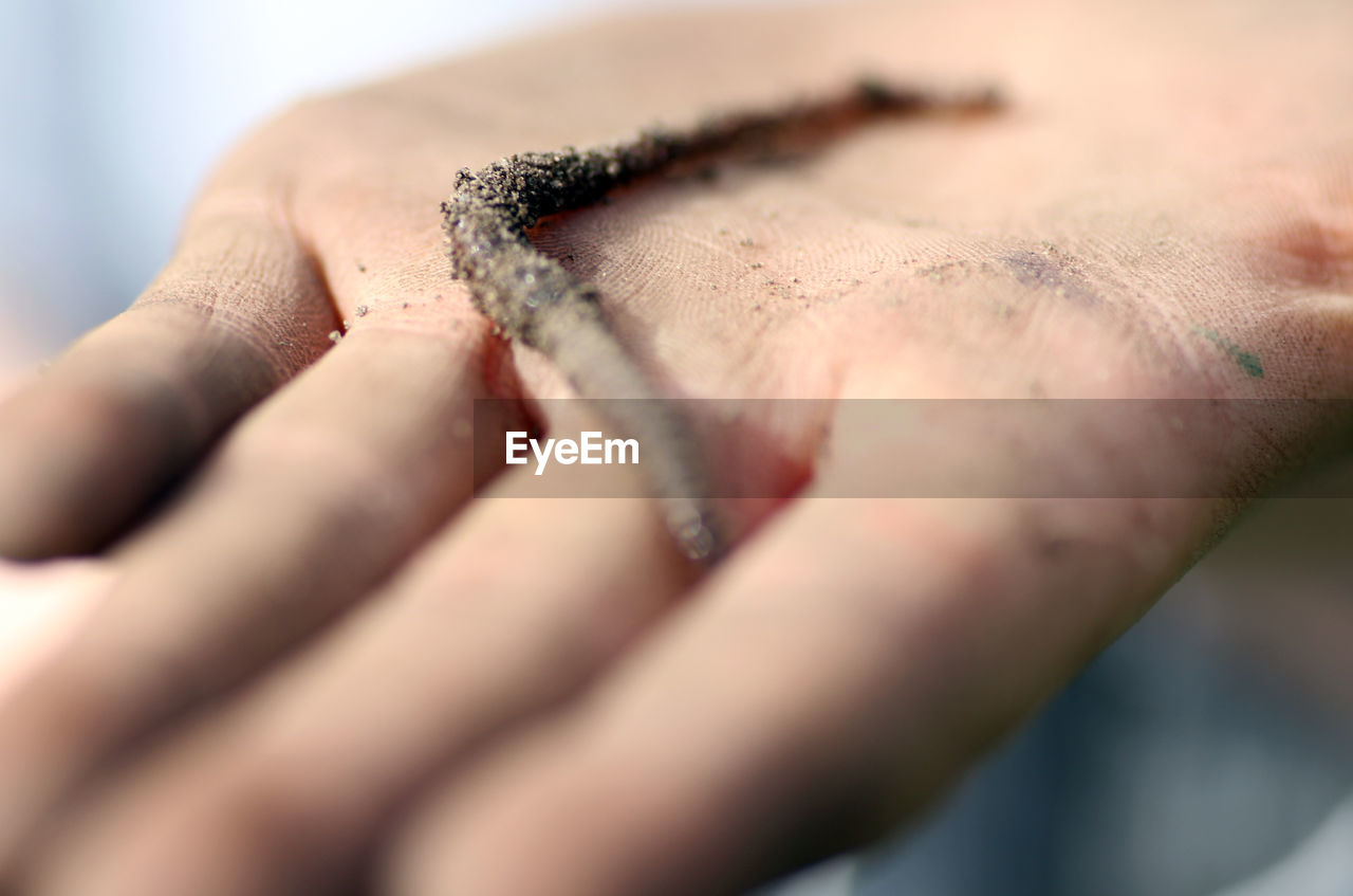 Close-up of person holding worm