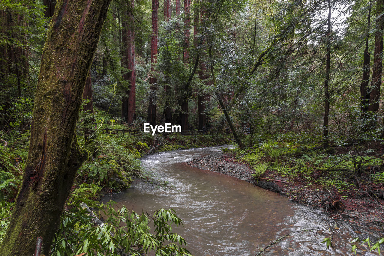 tree, forest, plant, land, water, beauty in nature, scenics - nature, no people, tree trunk, nature, trunk, tranquility, flowing water, woodland, motion, growth, day, non-urban scene, tranquil scene, outdoors, stream - flowing water, flowing, rainforest