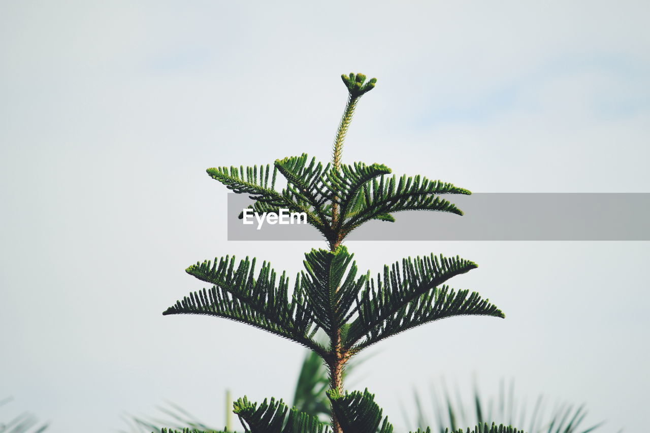 Close-Up Of Fern Against Sky