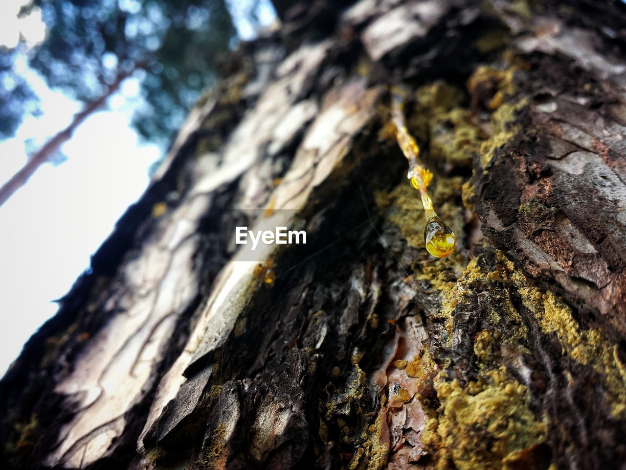 textured, no people, close-up, nature, tree trunk, day, outdoors, beauty in nature, tree, animal themes