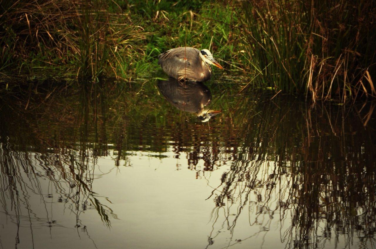 View Of Bird At Lakeside