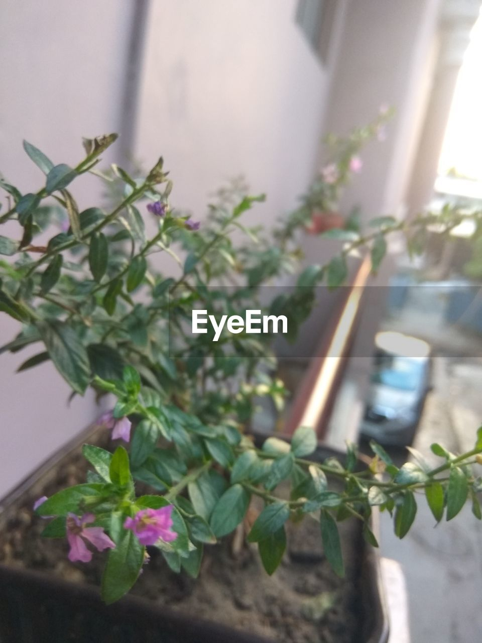 plant, growth, leaf, potted plant, no people, close-up, green color, day, nature, outdoors, flower, freshness