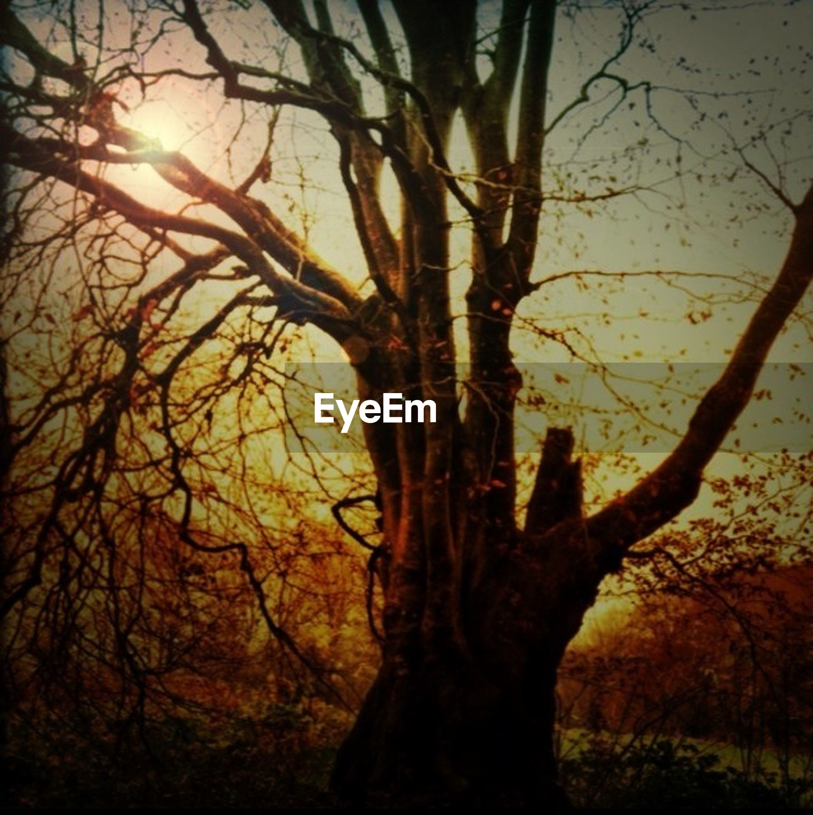 tree, branch, bare tree, silhouette, sunset, tree trunk, sun, tranquility, nature, sky, beauty in nature, growth, tranquil scene, scenics, low angle view, sunlight, orange color, back lit, outdoors, dead plant