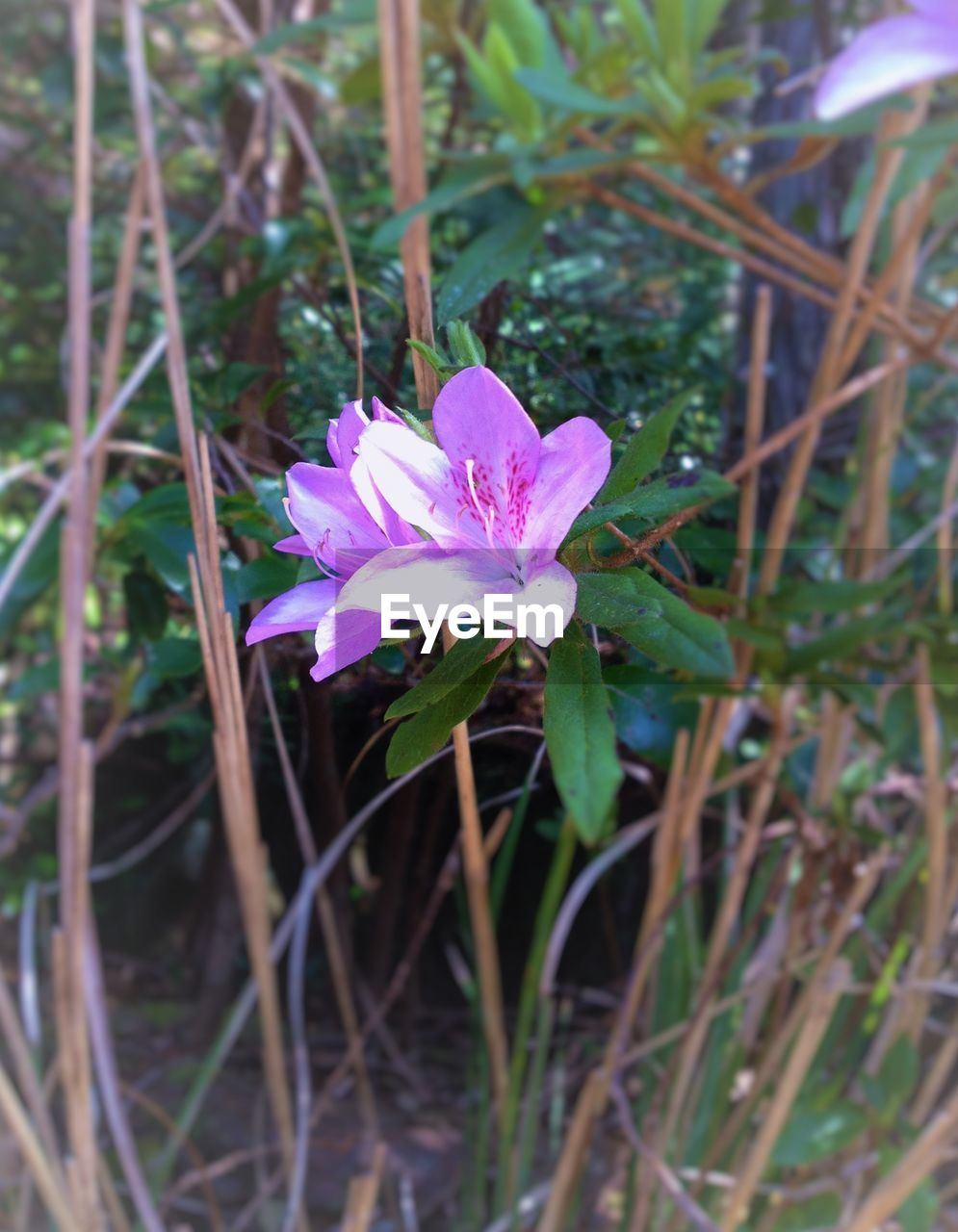flower, nature, growth, petal, beauty in nature, fragility, flower head, plant, pink color, no people, outdoors, day, blooming, freshness, close-up, grass, crocus