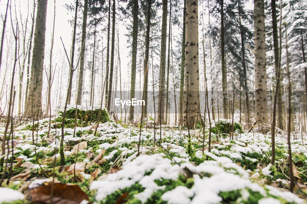 Snow covered plants in forest