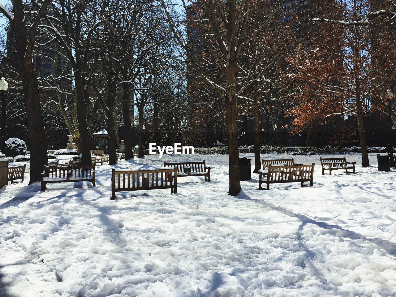 Trees and empty benches in snow covered park