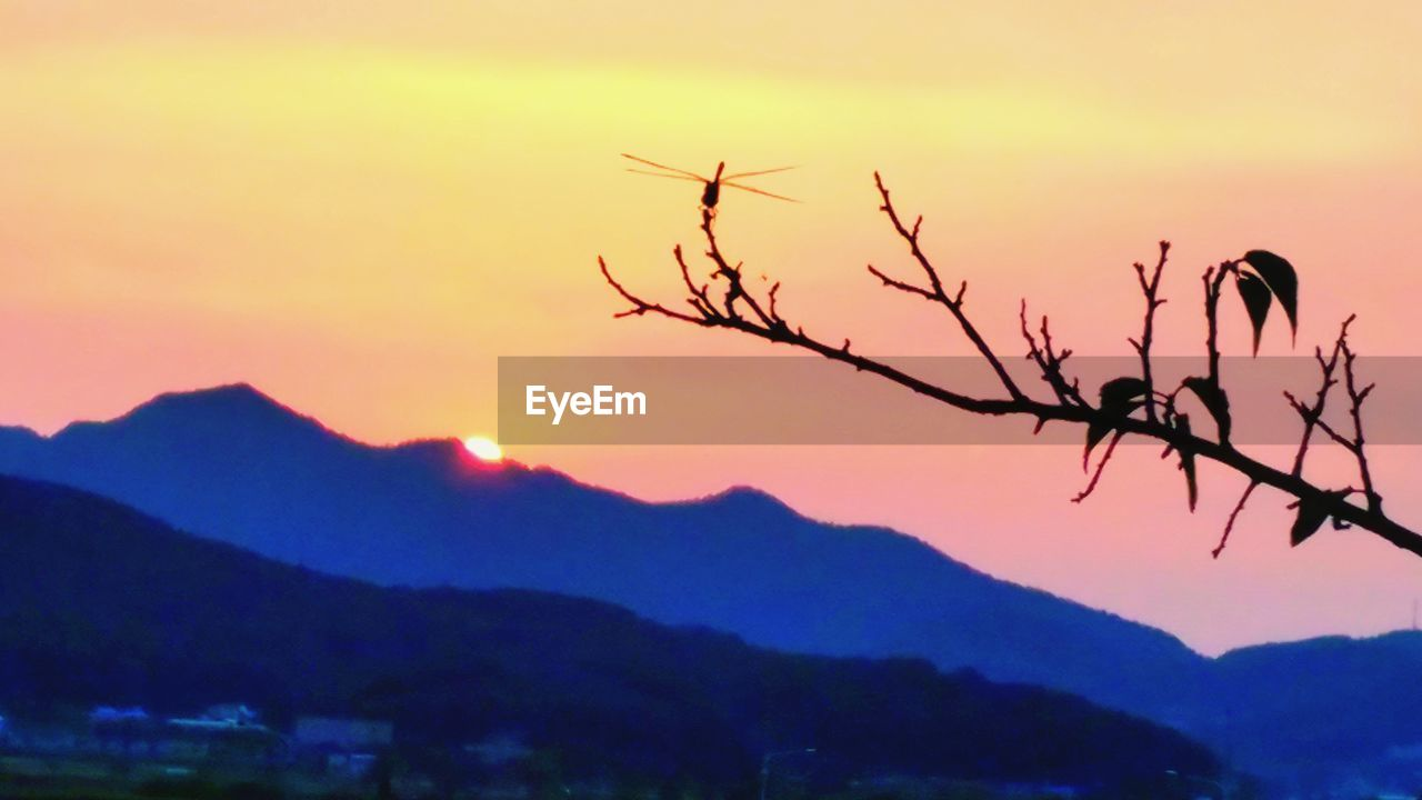 sunset, nature, mountain, beauty in nature, tranquility, scenics, outdoors, no people, sky, mountain range, tranquil scene, silhouette, tree, close-up, day