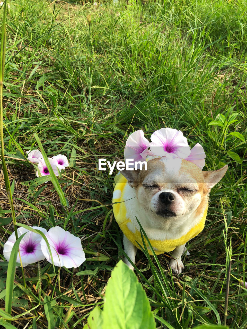 VIEW OF A DOG LOOKING AT FLOWER
