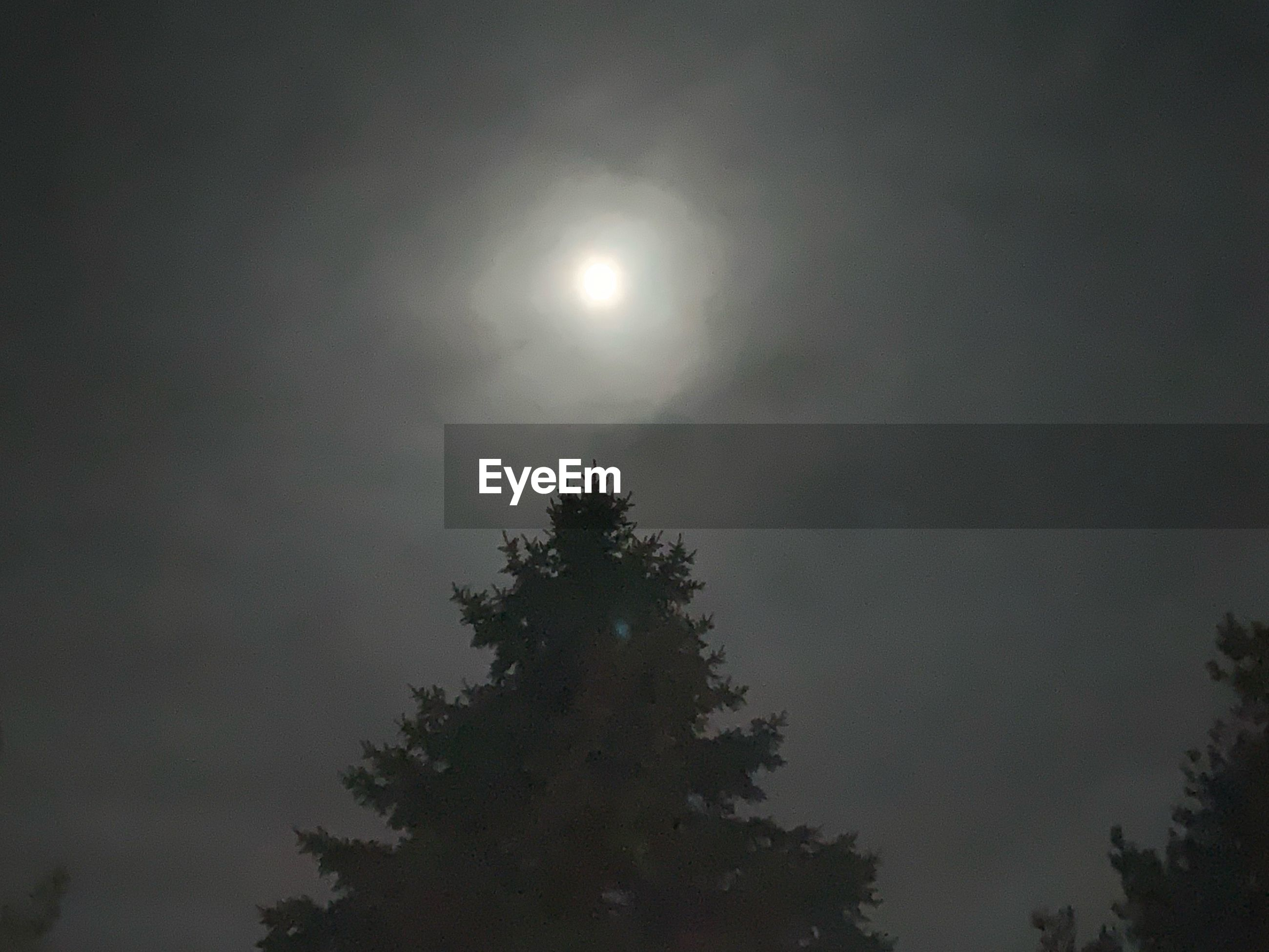 LOW ANGLE VIEW OF TREE AGAINST MOON IN SKY