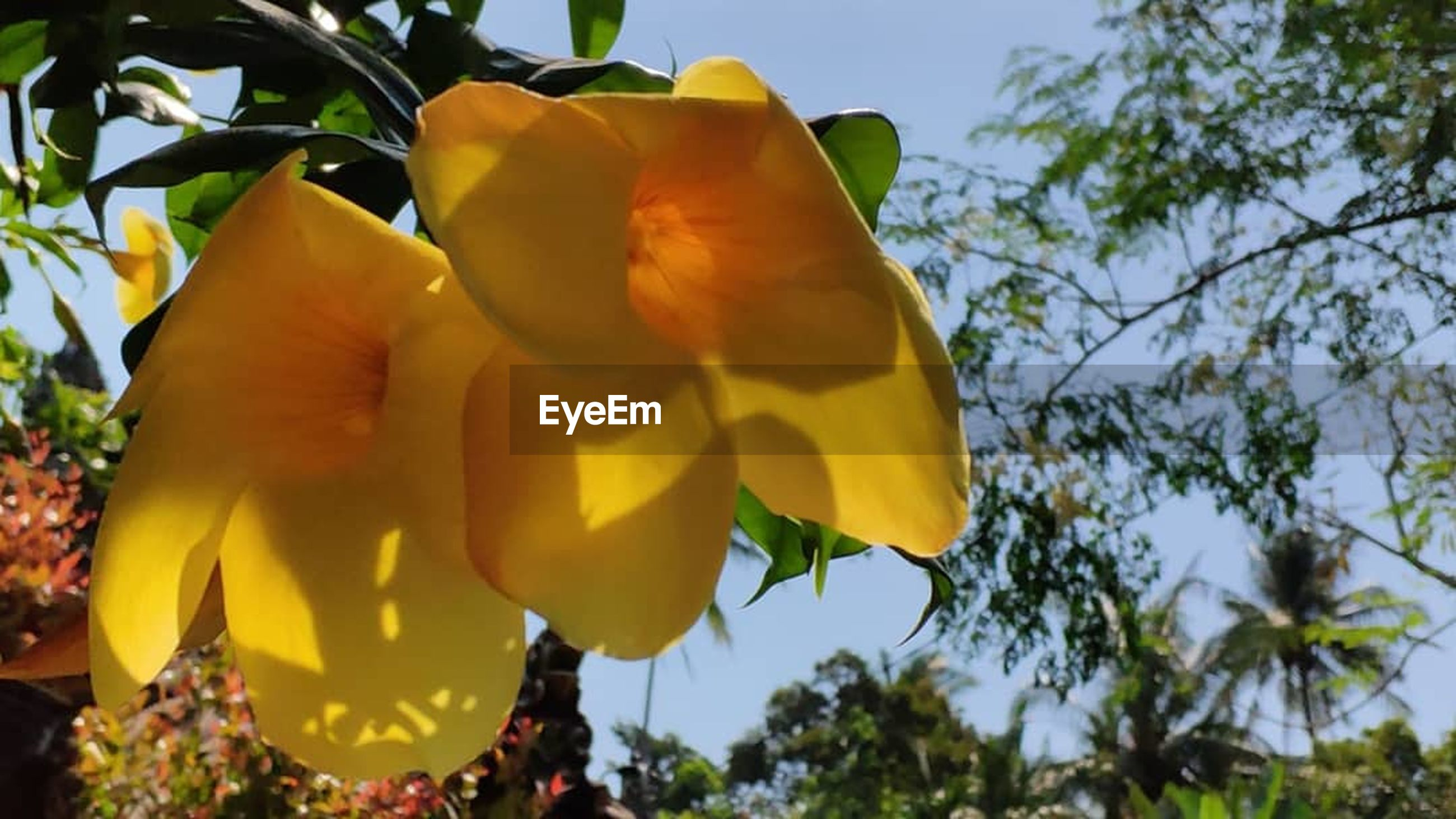 plant, flowering plant, beauty in nature, flower, growth, low angle view, nature, tree, petal, yellow, close-up, freshness, fragility, vulnerability, flower head, inflorescence, day, sky, no people, focus on foreground, outdoors