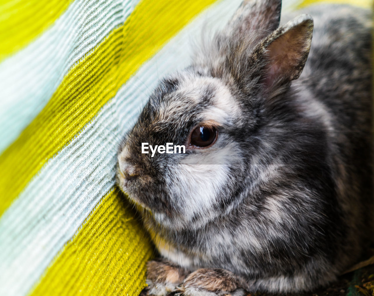 one animal, animal, animal themes, mammal, close-up, domestic, vertebrate, pets, animal wildlife, no people, domestic animals, rodent, yellow, focus on foreground, young animal, portrait, day, looking at camera, cute, rabbit, animal head, whisker