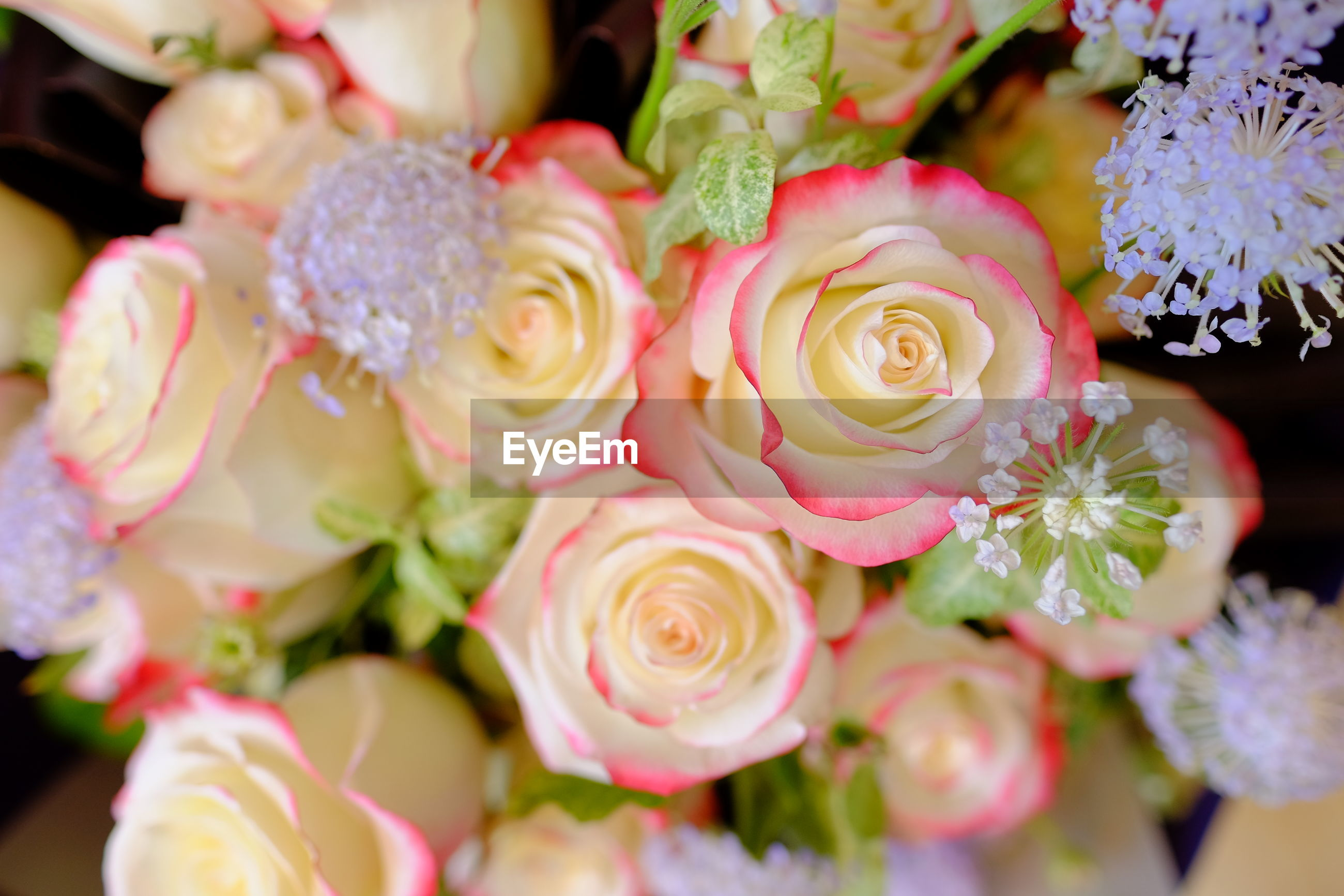 CLOSE-UP OF BOUQUET OF PINK ROSES