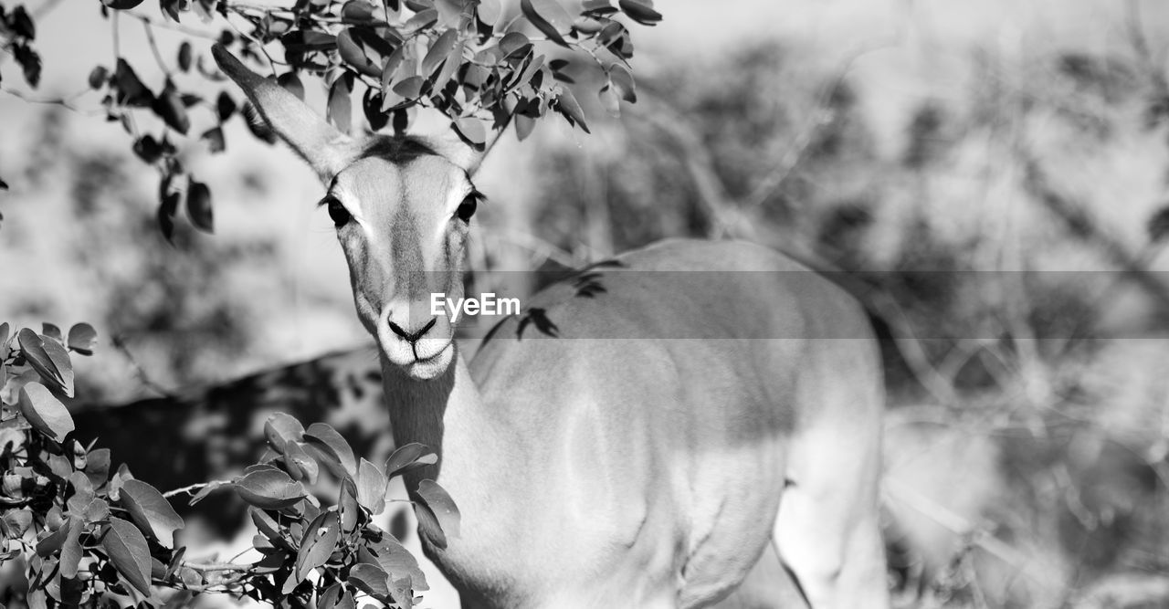 plant, one animal, animal themes, nature, animal wildlife, focus on foreground, day, animal, no people, animals in the wild, mammal, vertebrate, tree, close-up, selective focus, outdoors, growth, beauty in nature, domestic animals, herbivorous