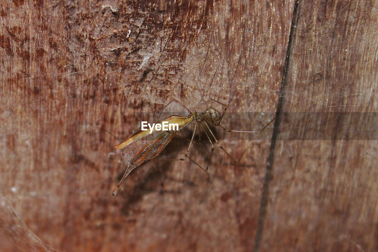 Close-Up Of Spider Feeding On Insect On Wood