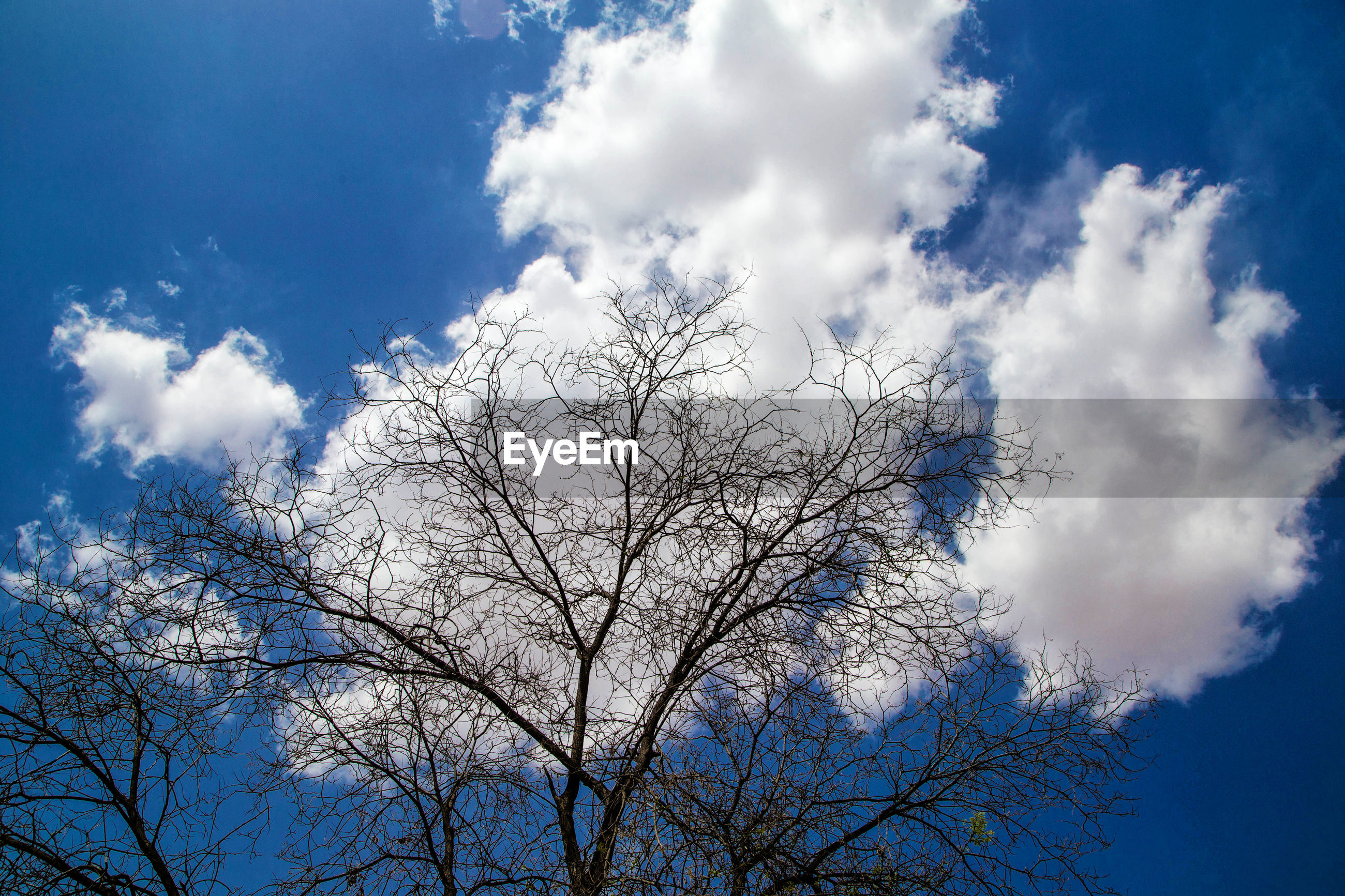 sky, low angle view, beauty in nature, tree, nature, cloud - sky, day, branch, outdoors, no people, blue, tranquility, bare tree, scenics, growth, flower
