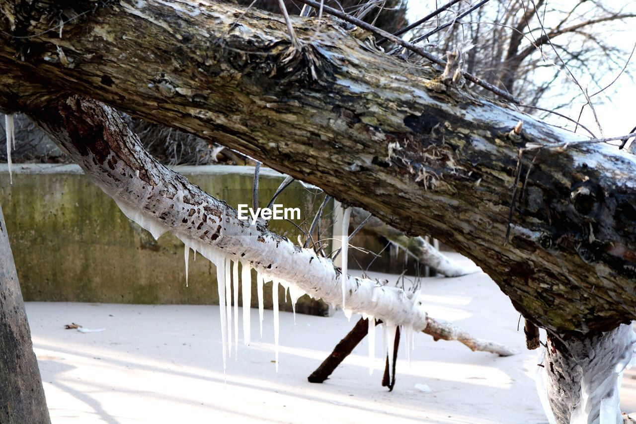 tree, snow, animal themes, tree trunk, nature, winter, animals in the wild, animal wildlife, no people, cold temperature, one animal, day, hanging, outdoors, branch, beauty in nature, bird, close-up, mammal