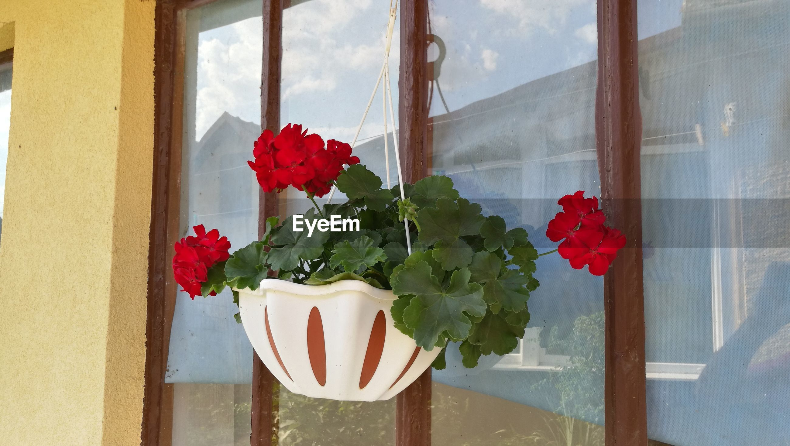 Close-up of potted plant by window