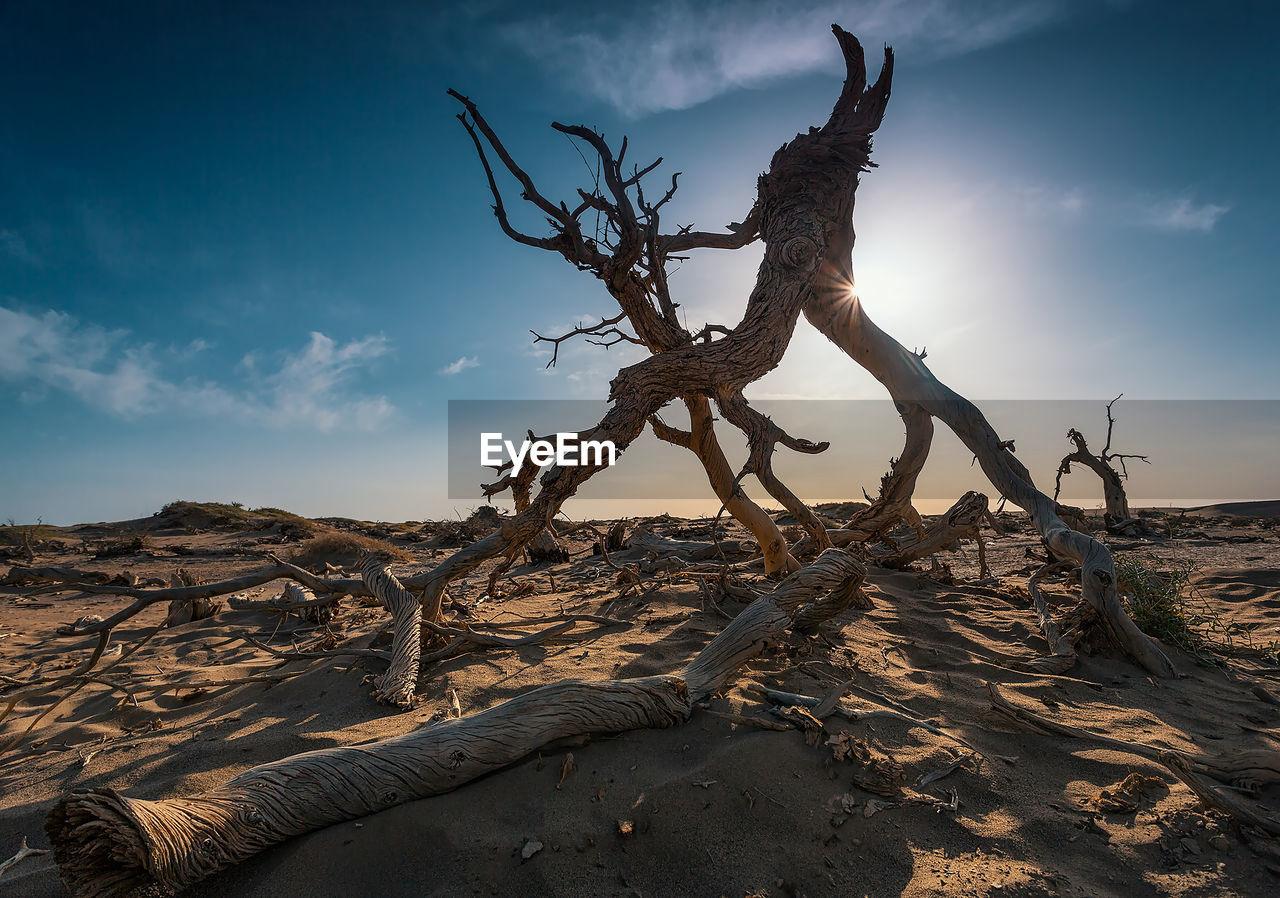 DRIFTWOOD ON TREE TRUNK IN DESERT
