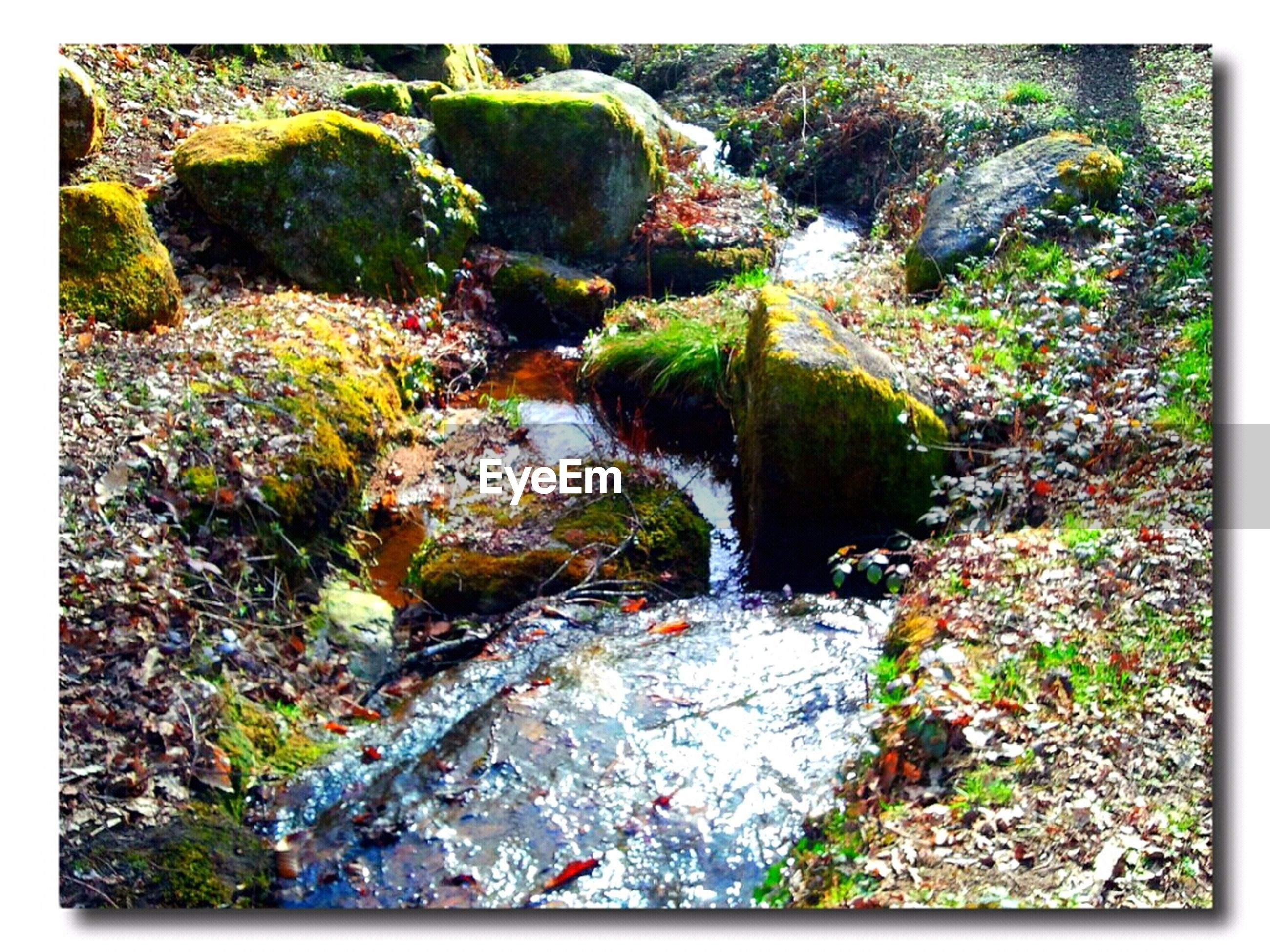 transfer print, auto post production filter, plant, growth, water, nature, rock - object, tranquility, stream, tree, beauty in nature, tranquil scene, forest, scenics, green color, rock, day, stone - object, stone, outdoors