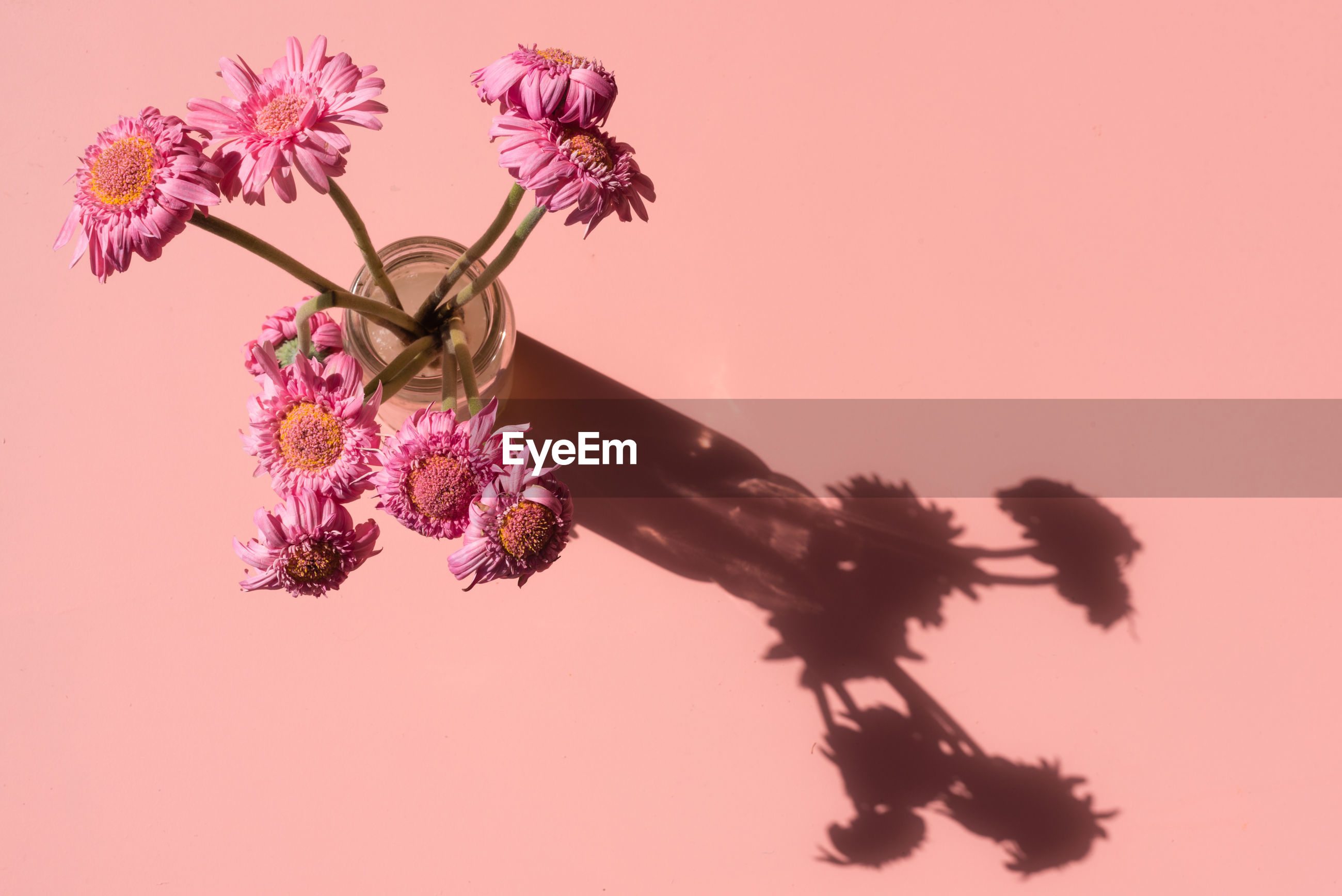 Directly above of pink flowers against coral background