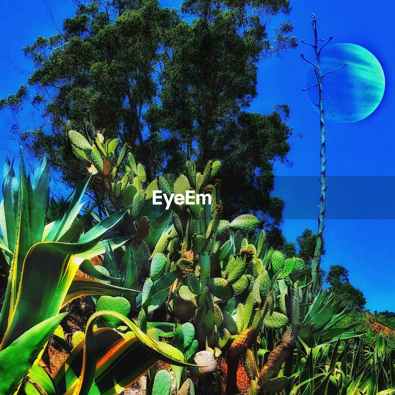 growth, blue, low angle view, nature, beauty in nature, no people, tree, green color, outdoors, day, plant, moon, sky, close-up