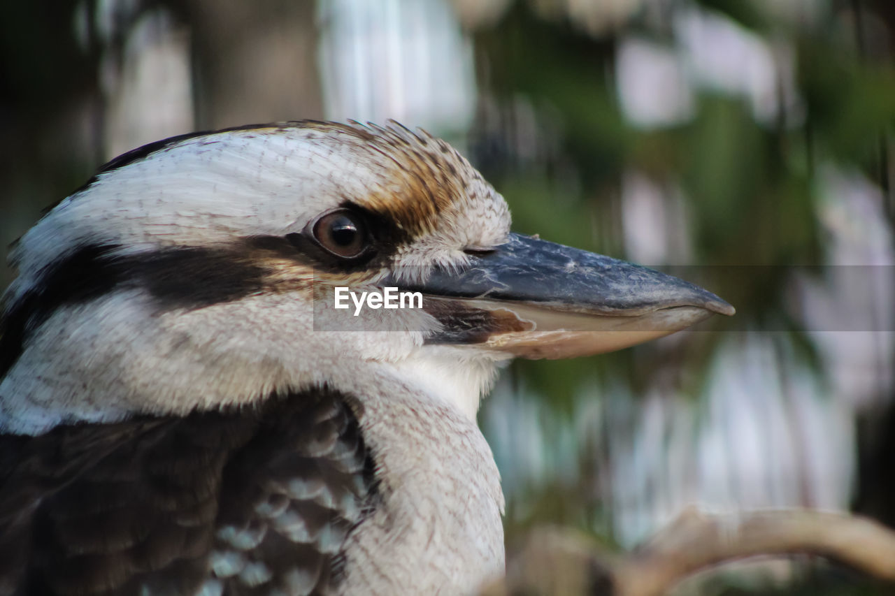 animal, animal themes, vertebrate, bird, animals in the wild, animal wildlife, one animal, focus on foreground, close-up, no people, day, beak, nature, looking, outdoors, animal body part, looking away, side view, young animal, animal head, animal eye, profile view